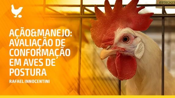 Capa do vídeo da série ação e manejo - avaliação de conformação em aves de postura - plataforma de vídeos do agronegócio - Agroflix
