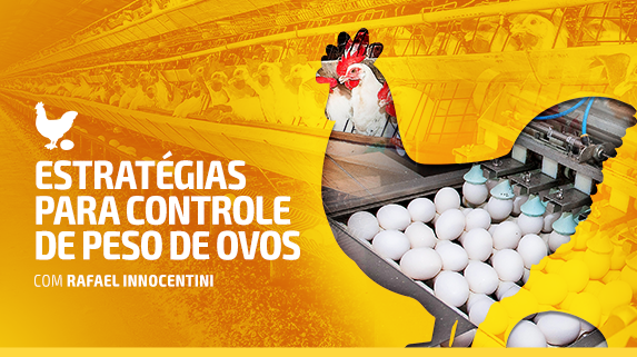 Capa do vídeo sobre as estratégias para controle de peso de ovos - plataforma de vídeos do agronegócio - Agroflix