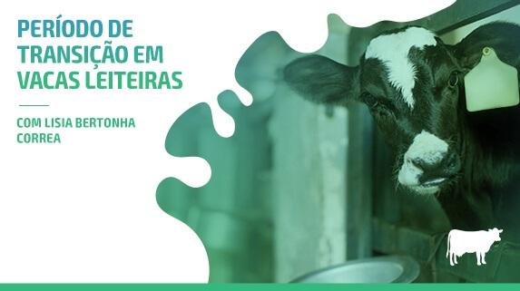 Capa do vídeo Vacas leiteiras: período de transição - plataforma de vídeos do agronegócio - Agroflix