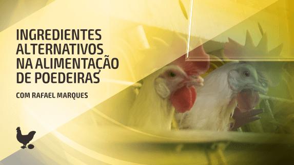 Esta imagem é uma miniatura do vídeo sobre a alimentação das galinhas poedeiras.