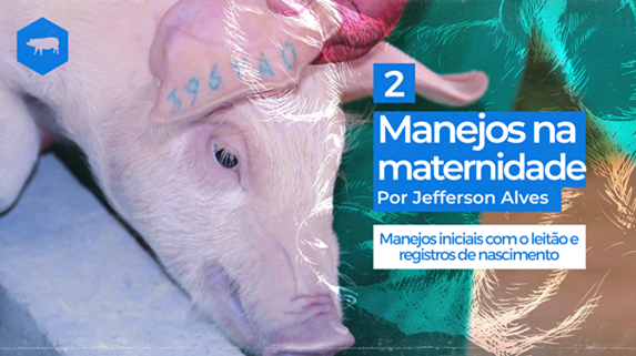 capa do vídeo agroflix sobre Cuidados iniciais com os leitões, registro de nascimento e dinâmica de parto